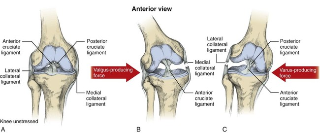 mcl injuries anatomy illustration